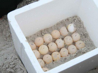 diy turtle egg incubator