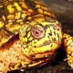 11 Types of Pet Turtles: Best Turtles to Have as Pets