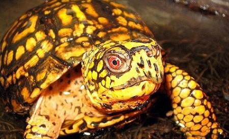 11 Types Of Pet Turtles Best Turtles To Have As Pets