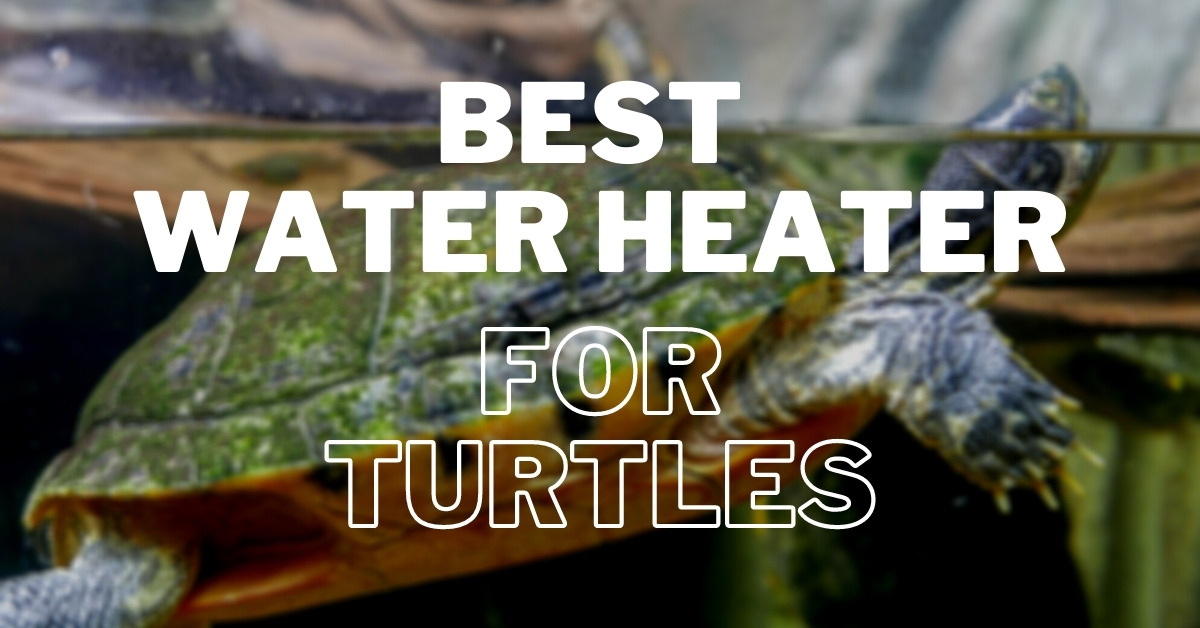 best water heater for turtles