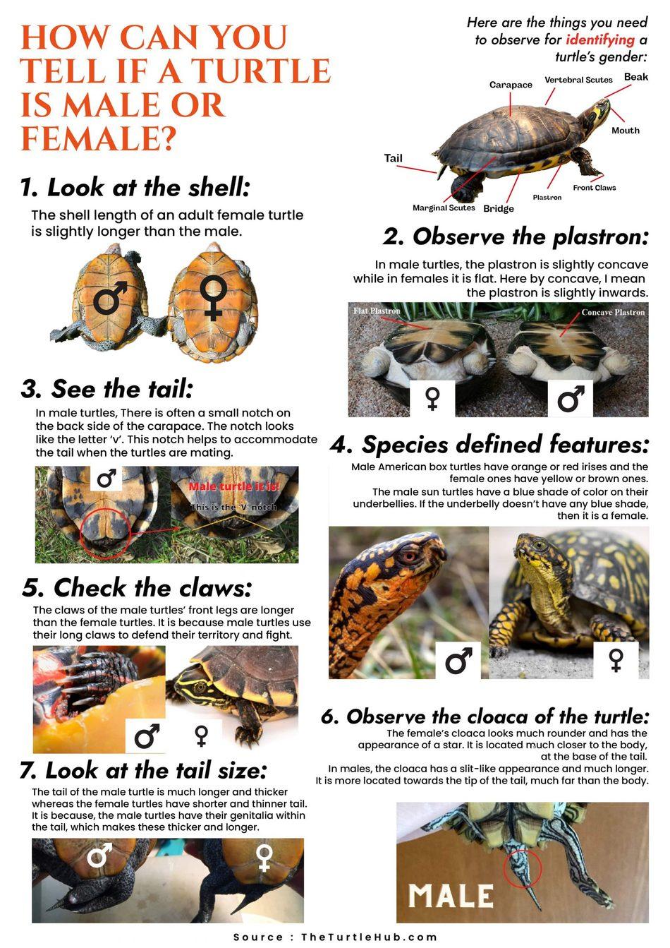 turtle gender identification