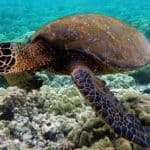 How Long Can Pet Turtles Stay Underwater?