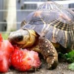 How Long Can a Pet Turtle Live Without Food?