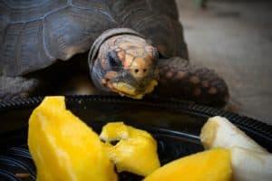 proper diet for turtles