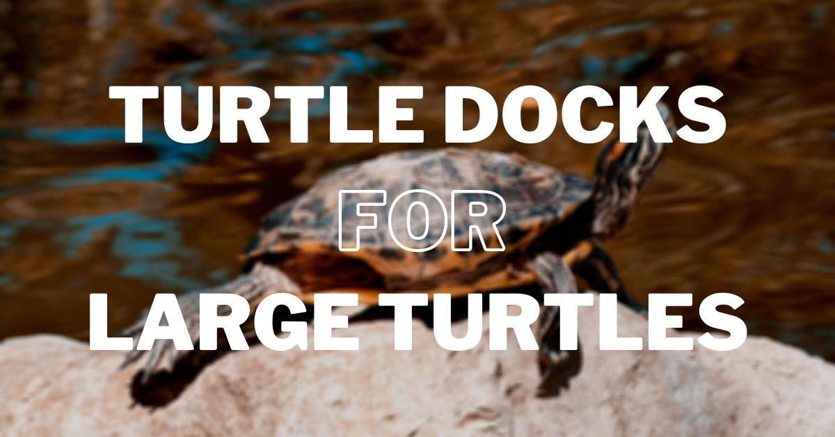 best turtle docks for large turtles