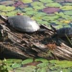 What's the best floating turtle dock for ponds?