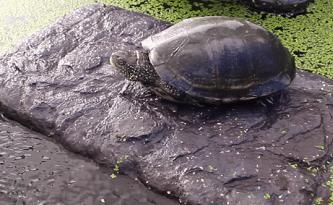 zoo med turtle pond dock