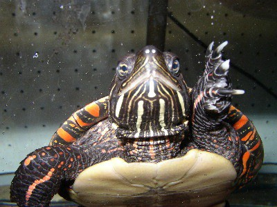How to Treat Respiratory Infection in Turtles at Home
