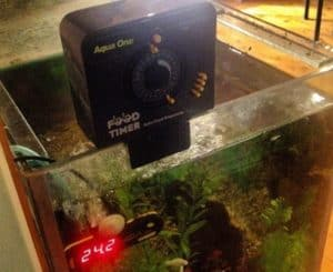 Best Automatic Turtle Feeder