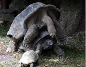 how much do turtles weigh