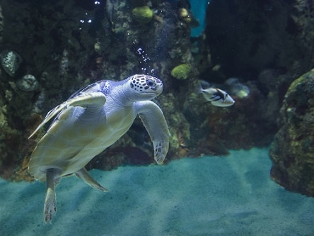 What Do Red Eared Sliders Need In Their Tank The Turtle Hub