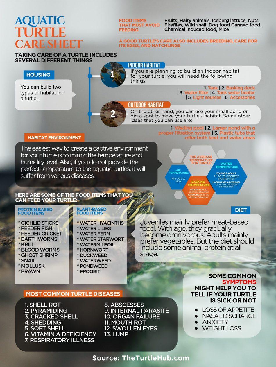 aquatic turtle care sheet