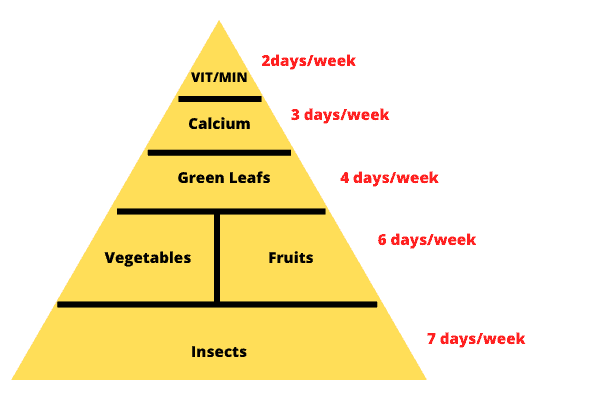 Food Pyramid Of A Box Turtle