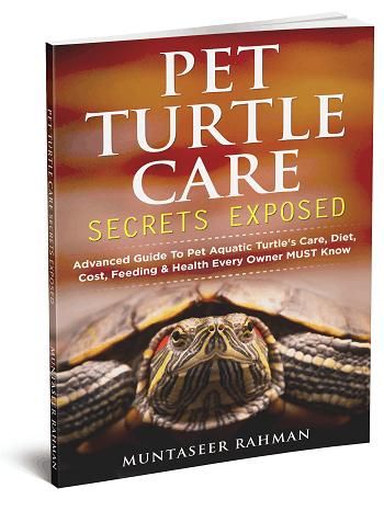 pet turtle care secrets exposed