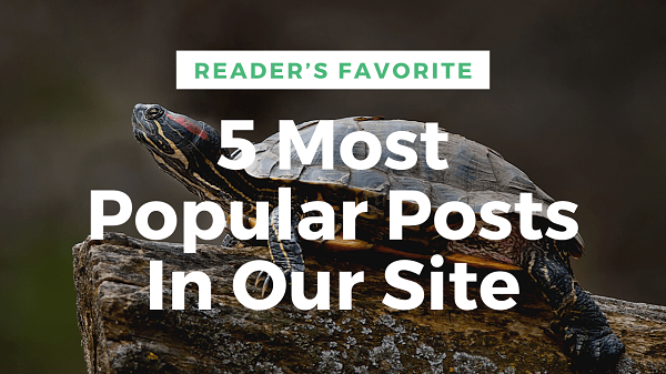 5 Most Popular Posts In Our Site