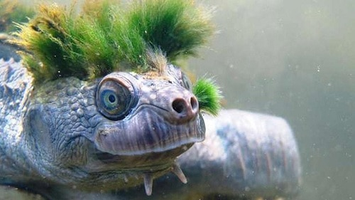 algae on turtle shell