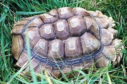 turtle shell pyramid