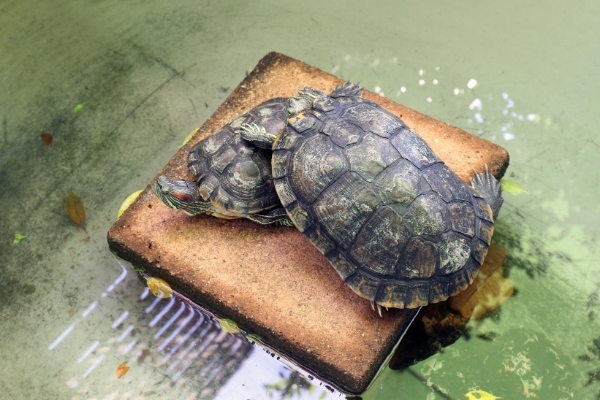 How To Take Care of Red Eared Sliders in Winter