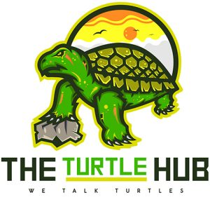 the turtle hub logo