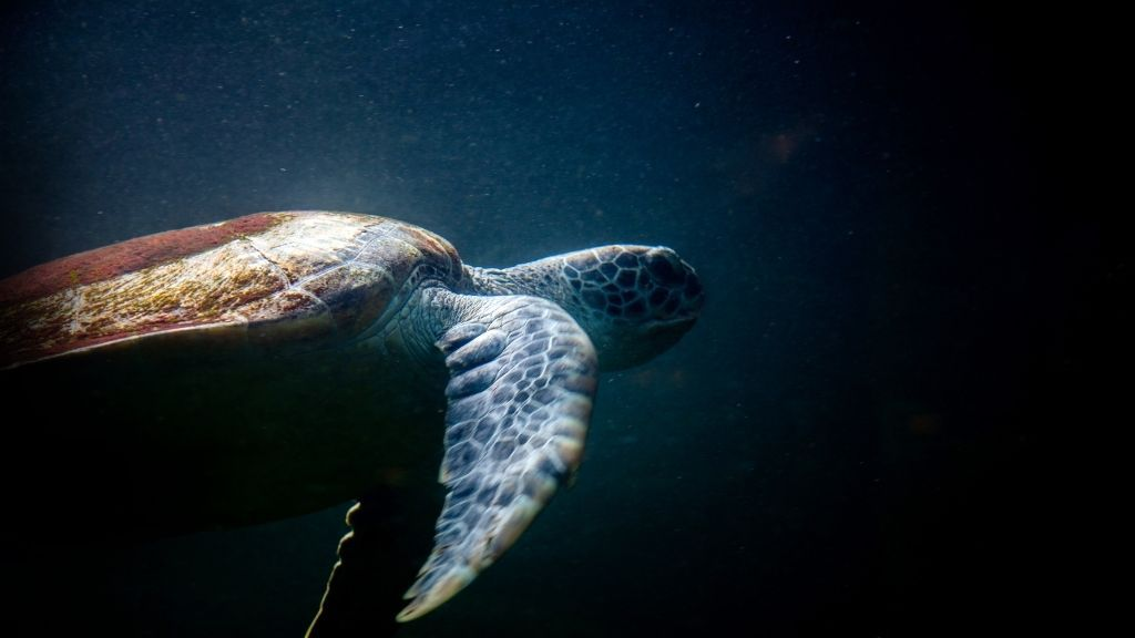 Can Turtles See In The Dark