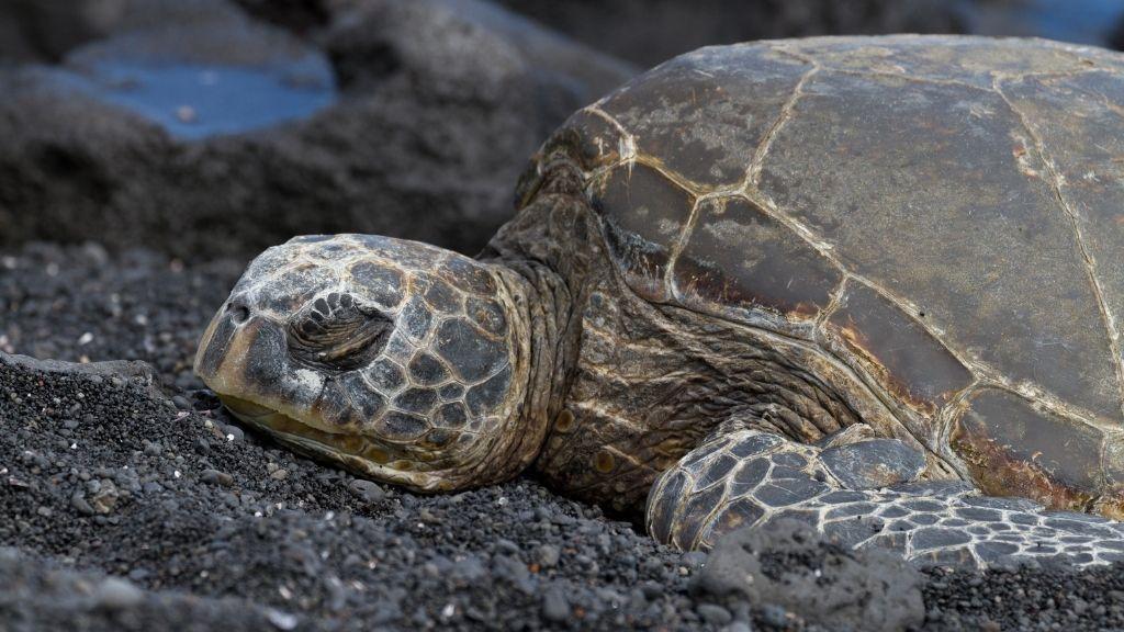 How Do Turtles Sleep Underwater (1)