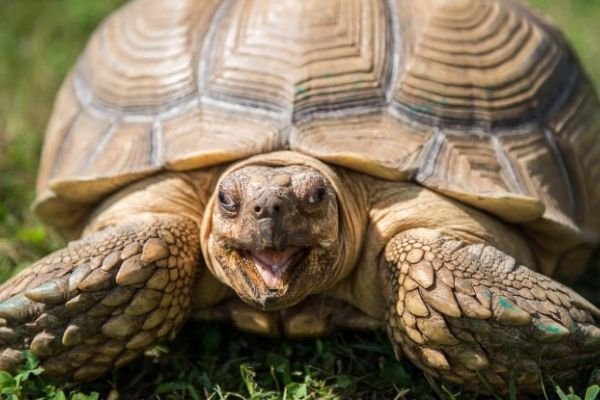 Why Do Turtles Live So Long