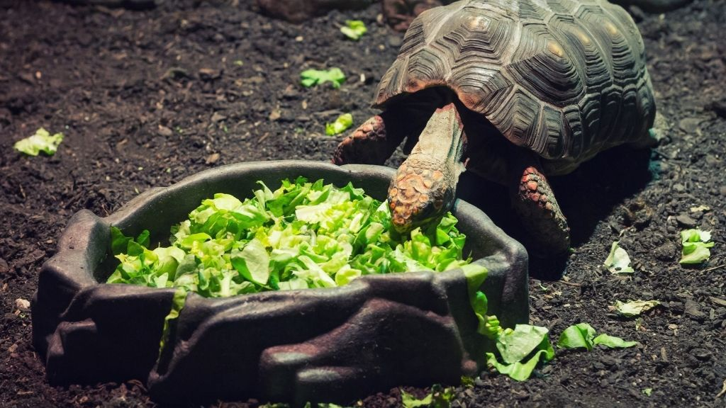 How Often Do You Feed A Turtle