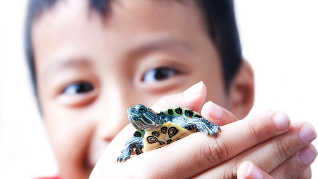 How To Take Care Of Baby Red Eared Sliders