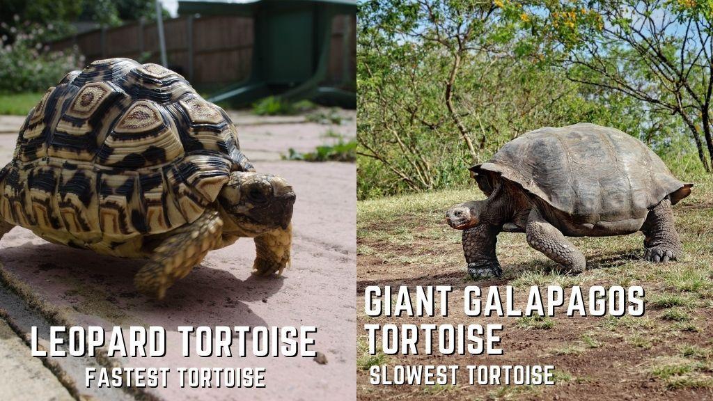 fastest vs slowest turtles