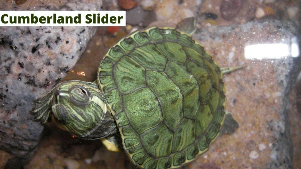 Cumberland slider