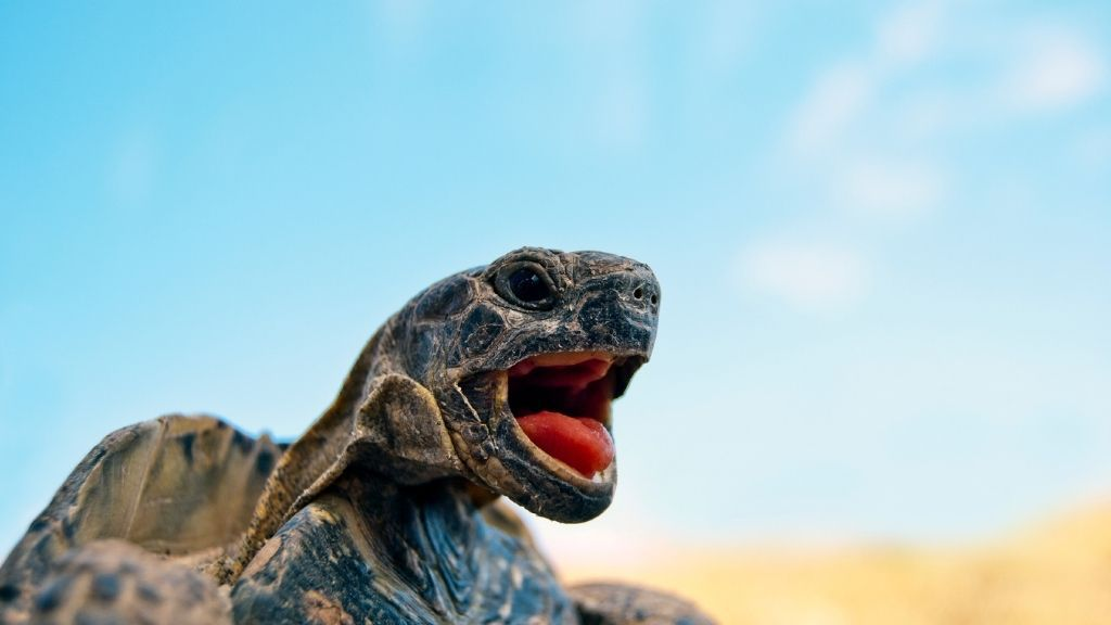 What Do Different Turtle Sounds Mean