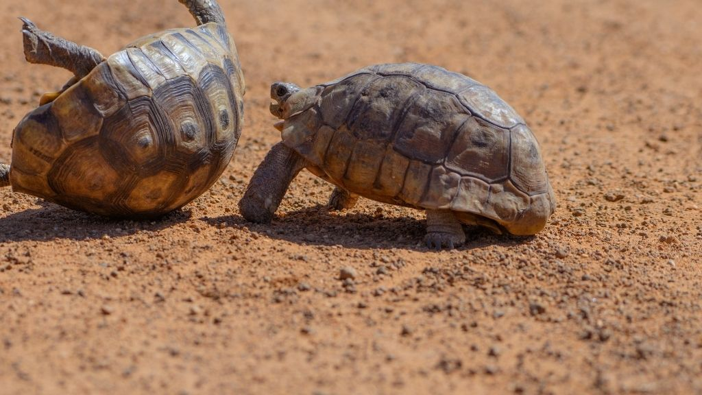 cons of keeping multiple turtles in single enclosure
