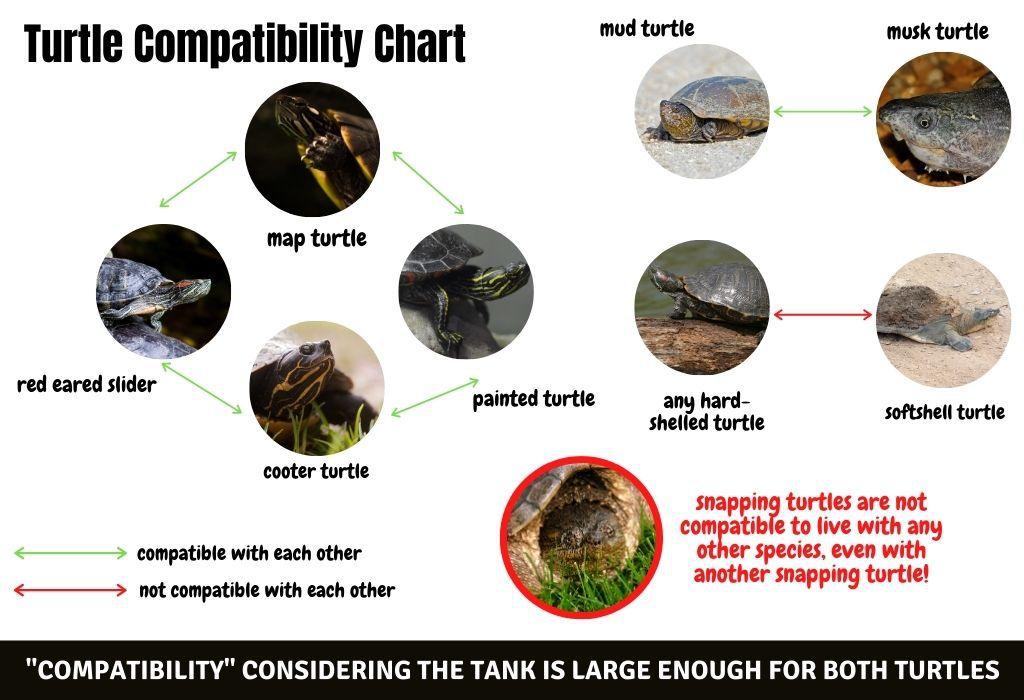turtle compatibility chart