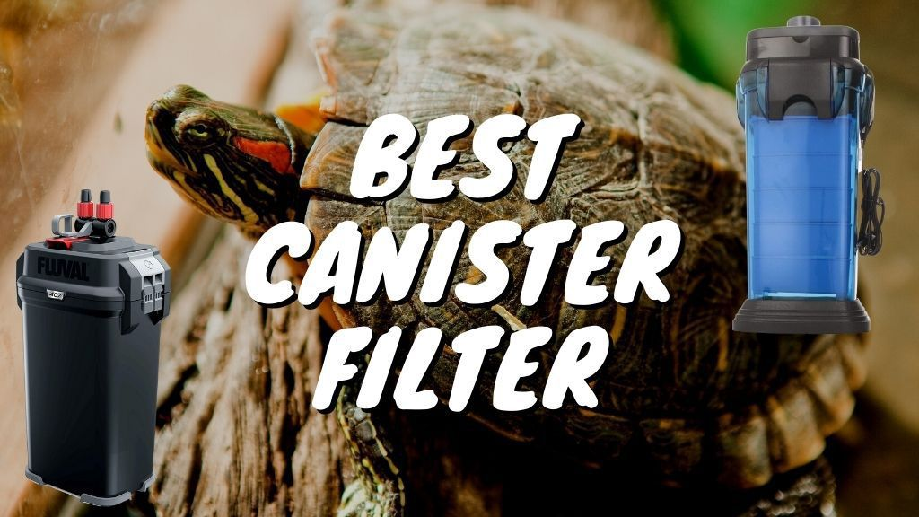 Best Canister Filter For Turtle Tank