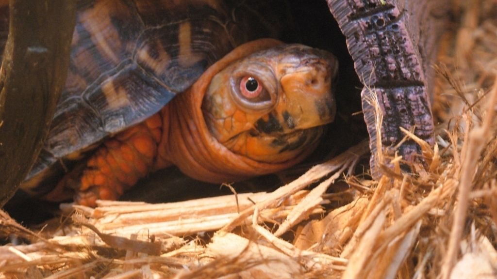 How To Take Care Of Eastern Box Turtle