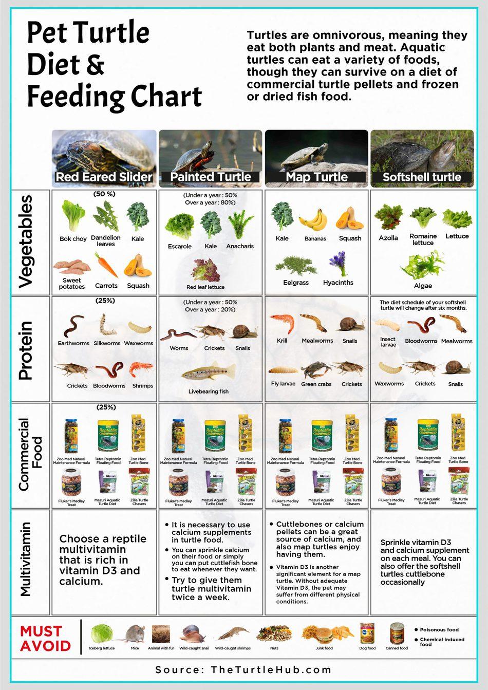 Pet Turtle Diet Feeding Chart