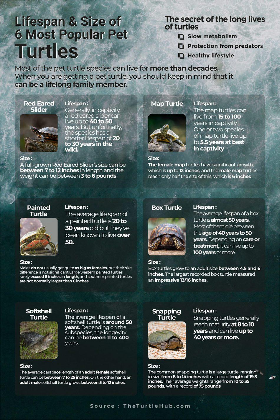 pet turtle lifespan and size