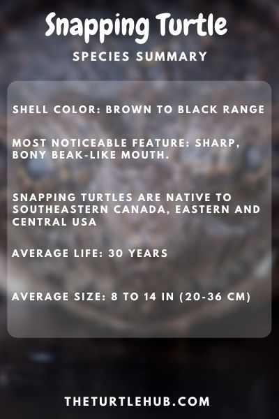Snapping Turtle Species Summary